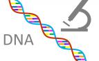 ¿Conoces la diferencia entre ADN y ARN?